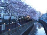 活動報告 地域交流「夜桜ライトアップ‼」